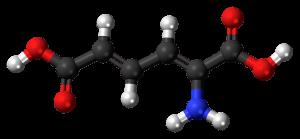 amino acid, metabolism diagram
